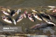 تلفات غیرعادی ماهیهای سد نعمتآباد