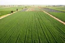 سند دار شدن 25 هزار هکتار از اراضی کشاورزی نقده