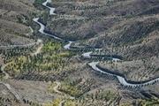 990 هزار اصله درخت در ارتفاعات جنوبی مشهد کاشته شده است