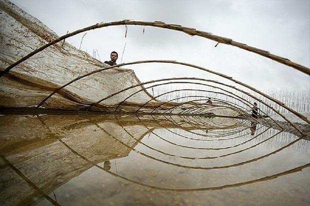 نخستین خزانه گیری برنج سال جدید در آستارا ایجاد شد
