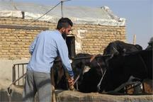 35 میلیارد ریال برای اشتغال روستاییان تایباد اختصاص یافت