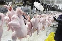کشتار روزانه ۱۱۰ تن مرغ در اردبیل