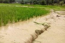 6 هزار و 420 میلیارد ریال خسارت به بخش کشاورزی استان وارد شد