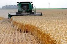 97 درصد گندم مزارع گلستان برداشت شد