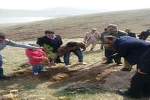 12 هزار اصله نهال در میاندوآب کاشت می شود