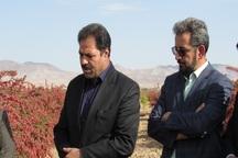 زرشک، زعفران و عناب راه نجات کشاورزی خراسان جنوبی است