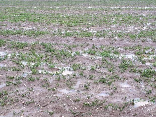 بارش تگرگ به باغ های گیلانغرب خسارت وارد کرد