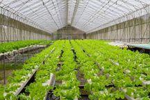 ۵۰ هزار هکتار فضای گلخانهای محصولات کشاورزی در کشور احداث میشود