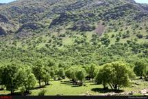 ایجاد بزرگترین پارک جنگلی غرب کشور در خرم آباد