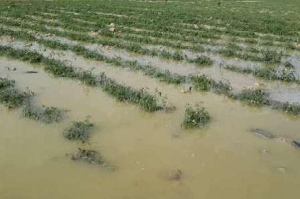 بارندگی بیش از 46 میلیارد ریال به کشاورزی اندیمشک خسارت زد