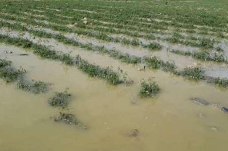 ۴۱۱ میلیارد تومان به کشاورزان خسارتدیده پرداخت شد