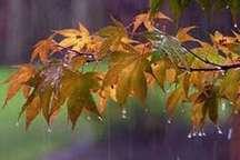 گلستان ازسه شنبه بارانی و هوا تا 14درجه سردتر می شود