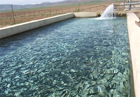 پیشبینی تولید 10 هزار تن ماهی در کردستان