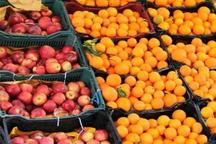 آغاز توزیع میوه شب عید در رشت با قیمت مصوب