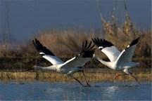 15 درصد تنوع زیست محیطی لرستان در منطقه گرین است