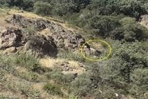 سه قلاده پلنگ ایرانی در شهرستان کوثر مشاهده شد