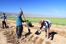 کشت گیاهان آب بر چهارمحال و بختیاری 25 درصد کاهش یافت