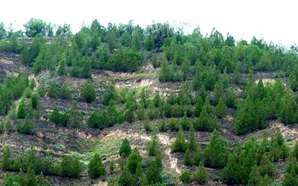 """برگزاری همایش مدیریت سبز با عنوان """"هوای پاک، مسئولان ، مردم"""""""