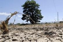خشکسالی 433 میلیارد ریال به کشاورزی گناباد خسارت زد