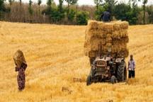 1800 تن جو از مزارع خور و بیابانک برداشت شد