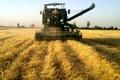 پیش بینی برداشت ۱۵ هزار تن گندم در شهرستان خدا آفرین