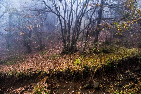 جنگل های ایران از نظر اکوسیستم پل ارتباطی دنیا هستند