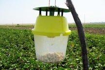11 هزار و 500 هکتار از اراضی کشاورزی ایلام زیر پوشش طرح مبارزه بیولوژیک قرار دارد