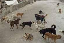 حیوانات ولگرد در یاسوج جمع آوری و عقیم سازی میشوند