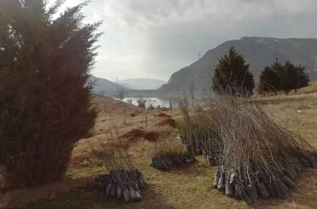 کاشت 7 هزار نهال در پارک جنگلی لتیان آغاز شد
