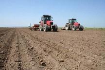 اختصاص 137 هزار هکتار از اراضی کشاورزی قزوین به کشت گندم
