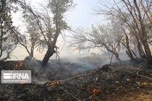 ۱۱۱ هکتار از مراتع جنگلی گیلانغرب امسال طعمه حریق شده است