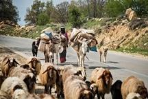 تغییر دغدغه های عشایر استان از اسکان به تقویت و توانمند سازی