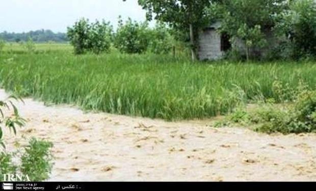 8.5 میلیارد ریال غرامت کشاورزان خراسان شمالی پرداخت شد