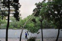 آسمان استان ابری همراه با وزش باد پیش بینی می شود