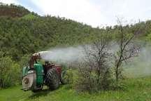 آغاز مبارزه بیولوژیکی با آفت برگ خوار و جوانه خوار بلوط در جنگلهای شهرستان سروآباد