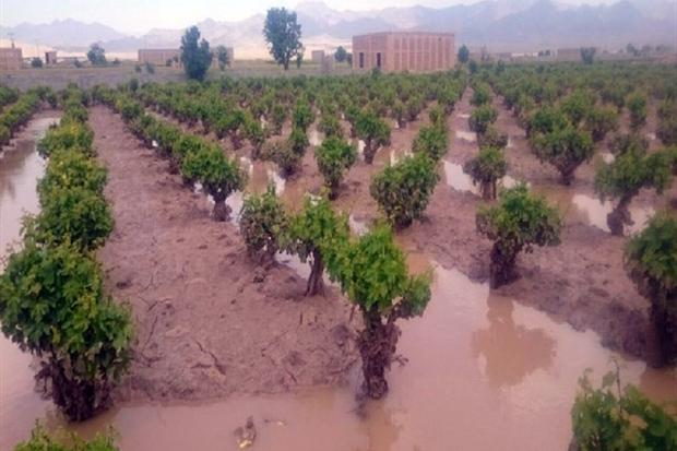 بارندگی 600 میلیارد ریال به کشاورزان کردستان خسارت زد