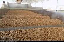 برای 20 درصد پسته تولیدی فاقد صادرات دامغان برنامه ریزی اصولی شود