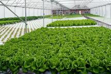 نصب سازه های گلخانه ای راهکار مهم مدیریت منابع آبی در بخش کشاورزی سمنان