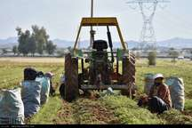 بیمه محصولات پاییزه در خوزستان تا 30دی تمدید شد