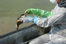 پیشگیری از آنفلوانزای فوق حاد پرندگان در آذربایجانغربی تشدید میشود