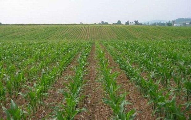 رونق اقتصاد هرمزگان با توسعه کشاورزی