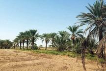 رکورد گرمترین روز زمستانی ایرانشهر در 50 سال اخیر شکسته شد