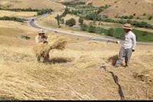 مطالبات گندمکاران چهارمحال و بختیاری بزودی پرداخت می شود