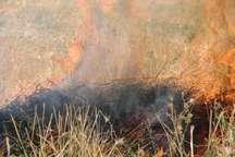 کشاورزان باید از سوزاندن بقای گیاهی در مزارع خودداری کنند