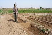 کشاورزان شهرستان امیدیه تقاضای صدور مجوز تجمع اعتراضی دارند