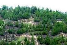 استان خراسان رضوی 970 هزار هکتار جنگل بیابانی و طبیعی دارد