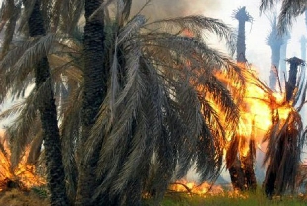 700 نخل از نخلستان های خنافره در آتش سوخت