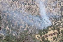 آتش دوباره در جنگل های «اندیکا » زبانه کشید