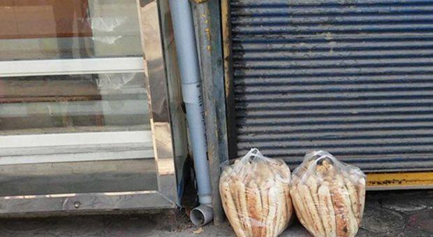 طرح ضربتی جمع آوری نان ساندویچی های رها شده در قزوین اجرا شد