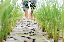 مصرف آب کشاورزی با تمرکز بر ارتقای بهره وری کاهش یابد